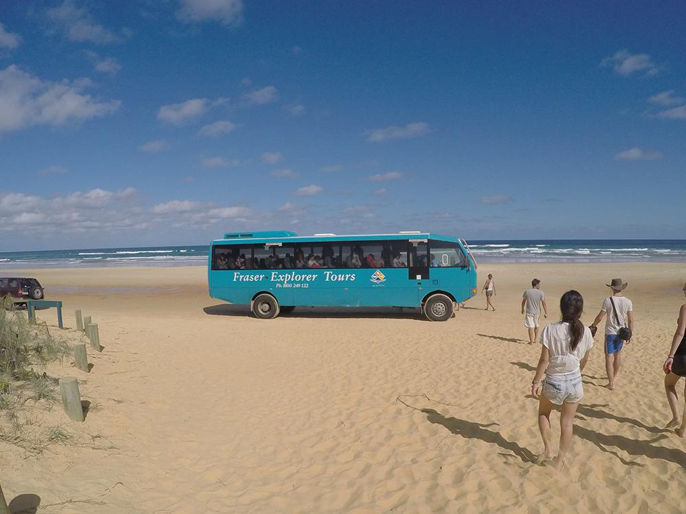 CoolDingo Tour Fraser Island