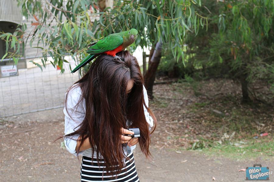 Melbourne-Parrots