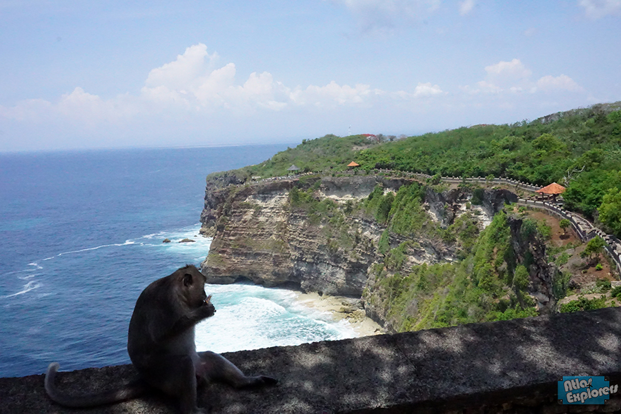 Uluwatu-Monkey